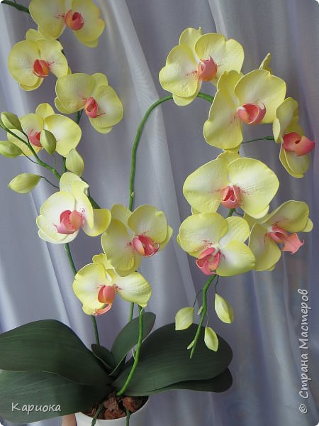 Доброго времени суток СМ! И снова у меня орхидея! На этот раз желто-лимонная. фото 7