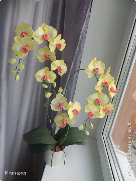 Доброго времени суток СМ! И снова у меня орхидея! На этот раз желто-лимонная. фото 2