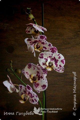 Привет, всем жителям чудесной страны. Я сегодня к вам вот с такой орхидеей. По тонировке бабочки, бутонов и самого цветочка я отсняла видео- мастер классы, которые вы можете посмотреть на моём канале на ютубе или на моей странице в контакте. Лепила и тонировала с живого цветочка. На некоторых фото моя орхидея с живым образцом. фото 1