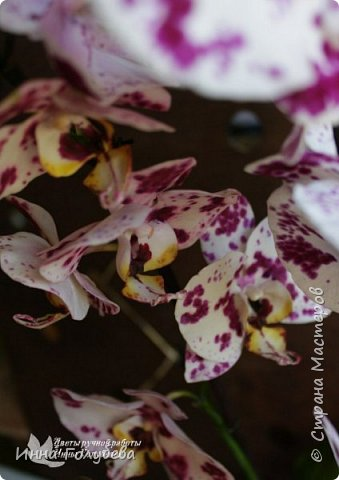 Привет, всем жителям чудесной страны. Я сегодня к вам вот с такой орхидеей. По тонировке бабочки, бутонов и самого цветочка я отсняла видео- мастер классы, которые вы можете посмотреть на моём канале на ютубе или на моей странице в контакте. Лепила и тонировала с живого цветочка. На некоторых фото моя орхидея с живым образцом. фото 18