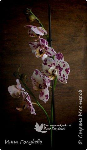 Привет, всем жителям чудесной страны. Я сегодня к вам вот с такой орхидеей. По тонировке бабочки, бутонов и самого цветочка я отсняла видео- мастер классы, которые вы можете посмотреть на моём канале на ютубе или на моей странице в контакте. Лепила и тонировала с живого цветочка. На некоторых фото моя орхидея с живым образцом. фото 12