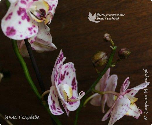 Привет, всем жителям чудесной страны. Я сегодня к вам вот с такой орхидеей. По тонировке бабочки, бутонов и самого цветочка я отсняла видео- мастер классы, которые вы можете посмотреть на моём канале на ютубе или на моей странице в контакте. Лепила и тонировала с живого цветочка. На некоторых фото моя орхидея с живым образцом. фото 17