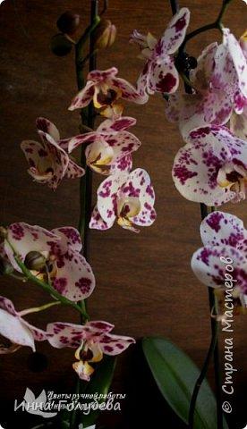 Привет, всем жителям чудесной страны. Я сегодня к вам вот с такой орхидеей. По тонировке бабочки, бутонов и самого цветочка я отсняла видео- мастер классы, которые вы можете посмотреть на моём канале на ютубе или на моей странице в контакте. Лепила и тонировала с живого цветочка. На некоторых фото моя орхидея с живым образцом. фото 20