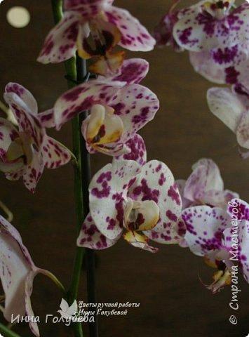 Привет, всем жителям чудесной страны. Я сегодня к вам вот с такой орхидеей. По тонировке бабочки, бутонов и самого цветочка я отсняла видео- мастер классы, которые вы можете посмотреть на моём канале на ютубе или на моей странице в контакте. Лепила и тонировала с живого цветочка. На некоторых фото моя орхидея с живым образцом. фото 10