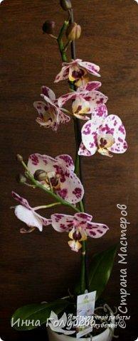 Привет, всем жителям чудесной страны. Я сегодня к вам вот с такой орхидеей. По тонировке бабочки, бутонов и самого цветочка я отсняла видео- мастер классы, которые вы можете посмотреть на моём канале на ютубе или на моей странице в контакте. Лепила и тонировала с живого цветочка. На некоторых фото моя орхидея с живым образцом. фото 5