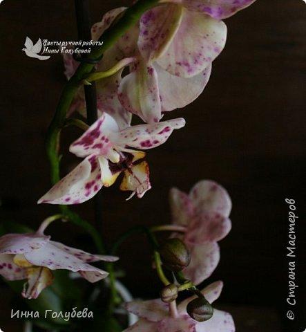 Привет, всем жителям чудесной страны. Я сегодня к вам вот с такой орхидеей. По тонировке бабочки, бутонов и самого цветочка я отсняла видео- мастер классы, которые вы можете посмотреть на моём канале на ютубе или на моей странице в контакте. Лепила и тонировала с живого цветочка. На некоторых фото моя орхидея с живым образцом. фото 3