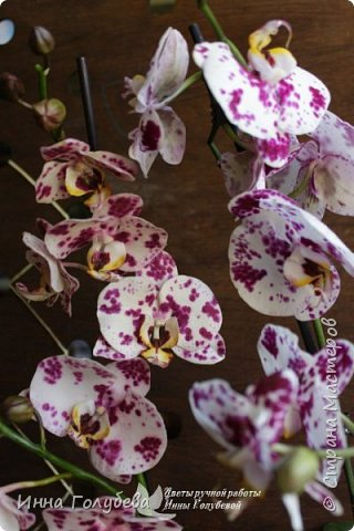 Привет, всем жителям чудесной страны. Я сегодня к вам вот с такой орхидеей. По тонировке бабочки, бутонов и самого цветочка я отсняла видео- мастер классы, которые вы можете посмотреть на моём канале на ютубе или на моей странице в контакте. Лепила и тонировала с живого цветочка. На некоторых фото моя орхидея с живым образцом. фото 4