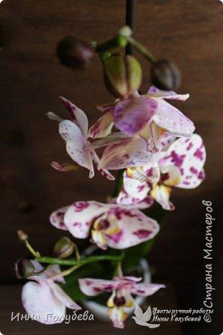 Привет, всем жителям чудесной страны. Я сегодня к вам вот с такой орхидеей. По тонировке бабочки, бутонов и самого цветочка я отсняла видео- мастер классы, которые вы можете посмотреть на моём канале на ютубе или на моей странице в контакте. Лепила и тонировала с живого цветочка. На некоторых фото моя орхидея с живым образцом. фото 2