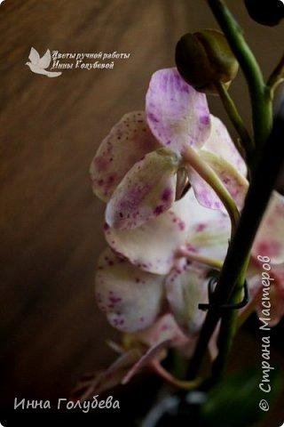 Привет, всем жителям чудесной страны. Я сегодня к вам вот с такой орхидеей. По тонировке бабочки, бутонов и самого цветочка я отсняла видео- мастер классы, которые вы можете посмотреть на моём канале на ютубе или на моей странице в контакте. Лепила и тонировала с живого цветочка. На некоторых фото моя орхидея с живым образцом. фото 14