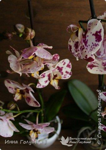 Привет, всем жителям чудесной страны. Я сегодня к вам вот с такой орхидеей. По тонировке бабочки, бутонов и самого цветочка я отсняла видео- мастер классы, которые вы можете посмотреть на моём канале на ютубе или на моей странице в контакте. Лепила и тонировала с живого цветочка. На некоторых фото моя орхидея с живым образцом. фото 6