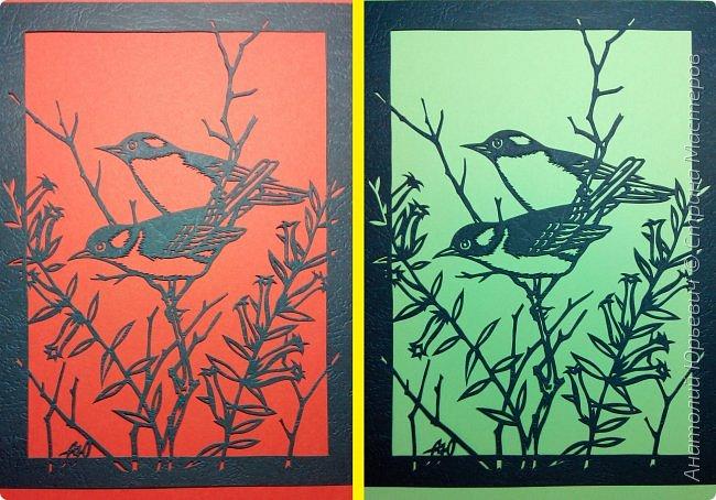 """Всем доброго времени суток! Вашему вниманию новая открытка с птичками. (птички и снова птички :)) - Черношапочная гаичка (лат. Poecile atricapillus) — небольшая птичка из семейства синицевых, обитающая в Северной Америке. - Небольшая птичка около 13 см в длину. Легко выделяется своим маленьким пухлым телом, большой чёрной шапочкой на голове, чёрным пятном на горле, и белыми щёчками. Верхняя часть тела и крылья тёмные зеленовато-серые, с белыми и чёрными полосками. Грудка по бокам тёмно-жёлтая, в середине беловатая. Клюв и лапки тёмные, преимущественной чёрные. По окраске самцы и самки не отличаются друг от друга. - Питается как животной, так и растительной пищей. - Эскиз для """"вырезалки"""" выполнен, изменён и доработан по цветной работе австралийского художника анималиста Eric shepherd. - Размер открытки 12х16см. (как всегда:)) фото 10"""