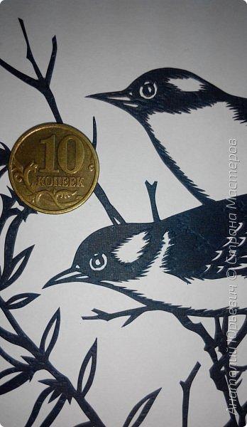 """Всем доброго времени суток! Вашему вниманию новая открытка с птичками. (птички и снова птички :)) - Черношапочная гаичка (лат. Poecile atricapillus) — небольшая птичка из семейства синицевых, обитающая в Северной Америке. - Небольшая птичка около 13 см в длину. Легко выделяется своим маленьким пухлым телом, большой чёрной шапочкой на голове, чёрным пятном на горле, и белыми щёчками. Верхняя часть тела и крылья тёмные зеленовато-серые, с белыми и чёрными полосками. Грудка по бокам тёмно-жёлтая, в середине беловатая. Клюв и лапки тёмные, преимущественной чёрные. По окраске самцы и самки не отличаются друг от друга. - Питается как животной, так и растительной пищей. - Эскиз для """"вырезалки"""" выполнен, изменён и доработан по цветной работе австралийского художника анималиста Eric shepherd. - Размер открытки 12х16см. (как всегда:)) фото 6"""