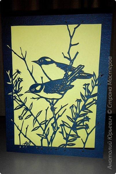 """Всем доброго времени суток! Вашему вниманию новая открытка с птичками. (птички и снова птички :)) - Черношапочная гаичка (лат. Poecile atricapillus) — небольшая птичка из семейства синицевых, обитающая в Северной Америке. - Небольшая птичка около 13 см в длину. Легко выделяется своим маленьким пухлым телом, большой чёрной шапочкой на голове, чёрным пятном на горле, и белыми щёчками. Верхняя часть тела и крылья тёмные зеленовато-серые, с белыми и чёрными полосками. Грудка по бокам тёмно-жёлтая, в середине беловатая. Клюв и лапки тёмные, преимущественной чёрные. По окраске самцы и самки не отличаются друг от друга. - Питается как животной, так и растительной пищей. - Эскиз для """"вырезалки"""" выполнен, изменён и доработан по цветной работе австралийского художника анималиста Eric shepherd. - Размер открытки 12х16см. (как всегда:)) фото 1"""