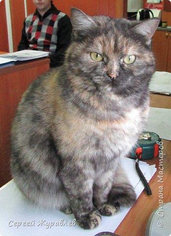 Кошечка Жулька фото 3