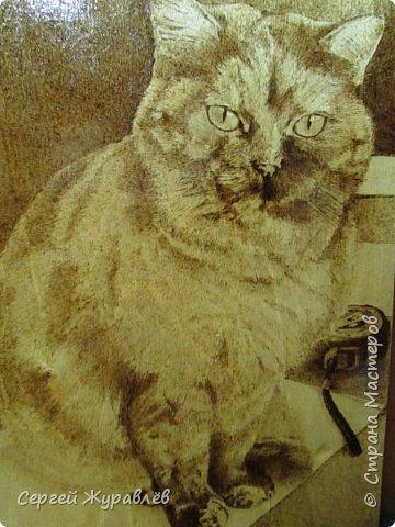 Кошечка Жулька фото 1
