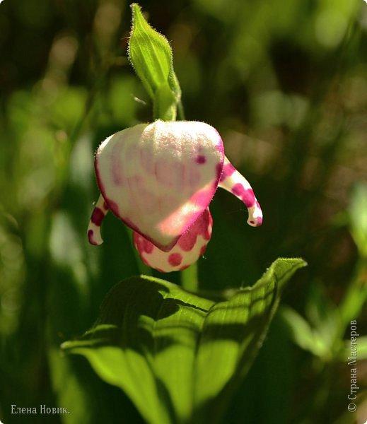 Доброго времени суток, жители Страны Мастеров.  Сегодня хочу показать вам дальневосточные орхидеи Венерин башмачок и ландыши. Пара поездок прошла в пустую, в том плане что орхидеи не нашли. Поэтому в этот раз решили отъехать от города на значительное расстояние. В это время, разгул клещей, внучку с собой стараюсь не брать - страшновато.  фото 12