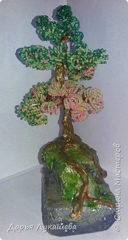 """Бонсай - миниатюрное деревце. Одна из легенд гласит, что некий император в Китае повелел создать миниатюрную империю со всеми деревьями, городами, реками и горами. Для этой цели и были созданы миниатюрные деревья. Свое дерево я назвала """"Надежда"""", потому что, хоть оно и растет на камне, все равно живет, цепляется корнями за все, что возможно, и цветёт.  фото 2"""