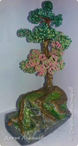"""Бонсай - миниатюрное деревце. Одна из легенд гласит, что некий император в Китае повелел создать миниатюрную империю со всеми деревьями, городами, реками и горами. Для этой цели и были созданы миниатюрные деревья. Свое дерево я назвала """"Надежда"""", потому что, хоть оно и растет на камне, все равно живет, цепляется корнями за все, что возможно, и цветёт.  фото 1"""