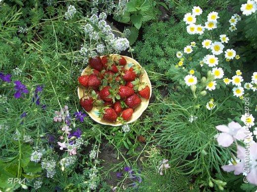Здравствуй, лето! Жаркое, ягодное! На градуснике-+34...при такой температуре ягоды клубники(земляники?) очень сладкие. Салфетка вышита гладью, старинным китайским мулине.  фото 3