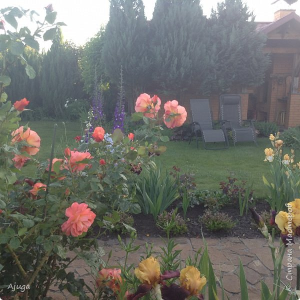 Мой сад сегодня... фото 8