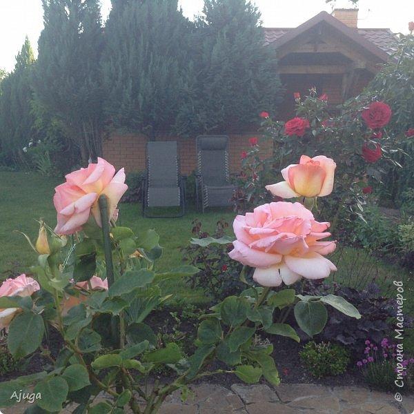 Мой сад сегодня... фото 9