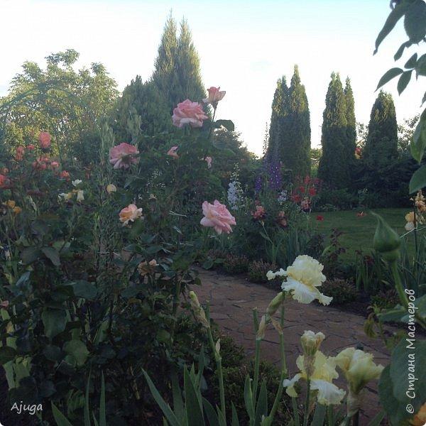 Мой сад сегодня... фото 10