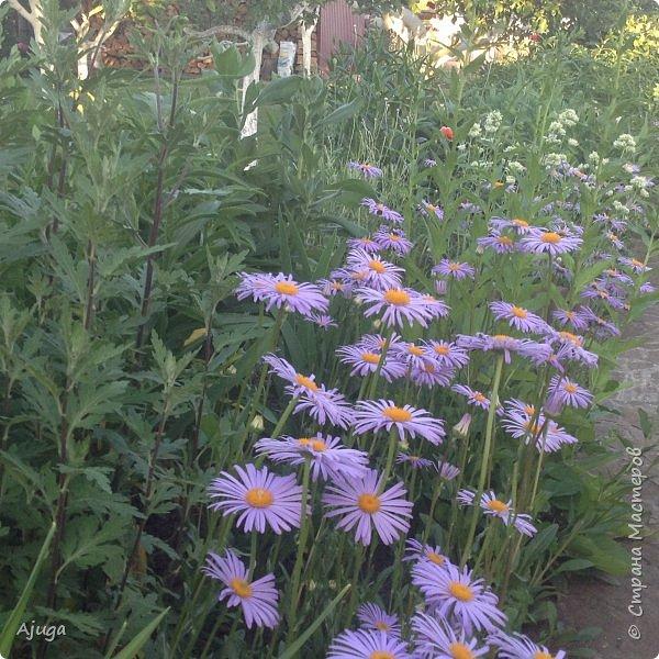 Мой сад сегодня... фото 13