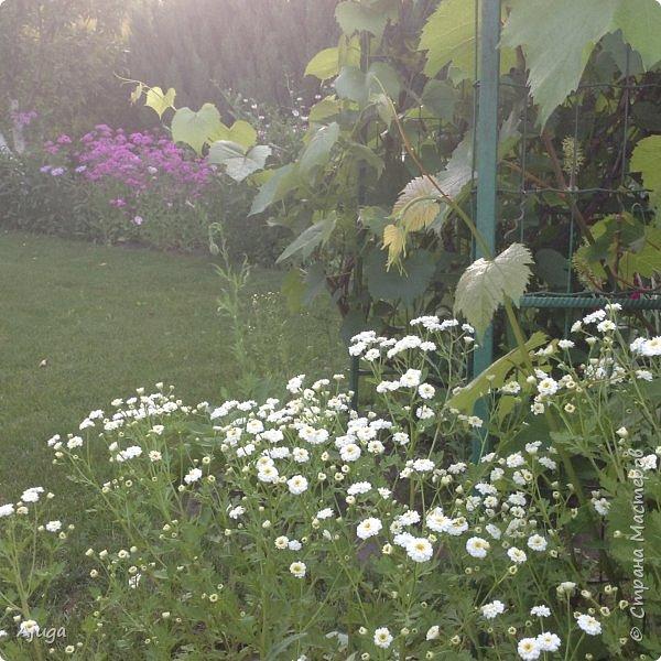 Мой сад сегодня... фото 14
