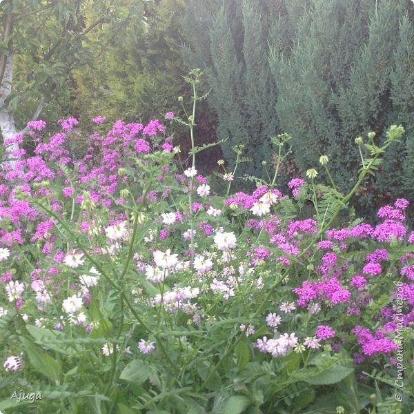 Мой сад сегодня... фото 15