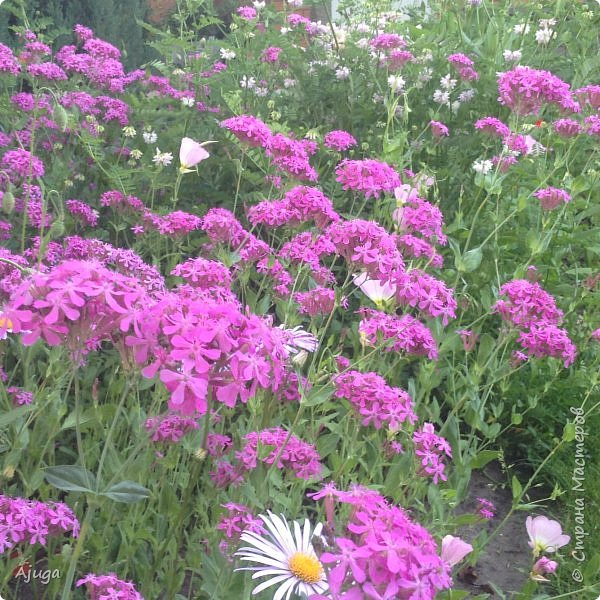 Мой сад сегодня... фото 16