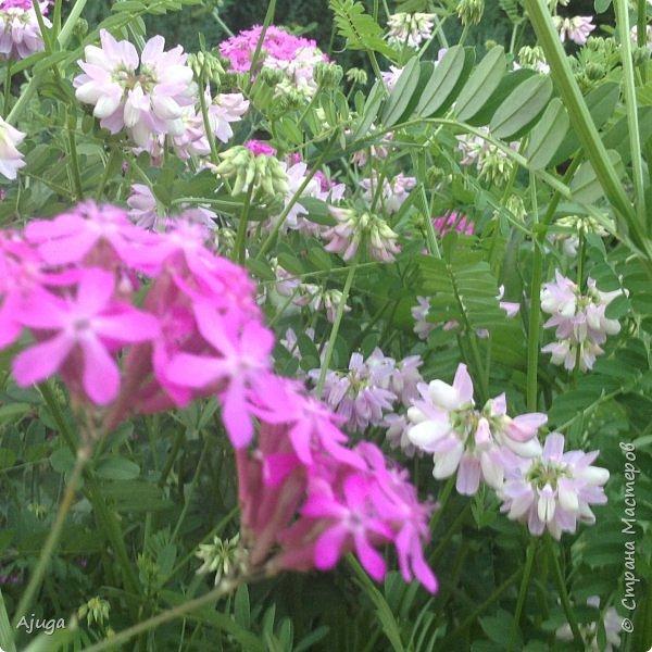 Мой сад сегодня... фото 18