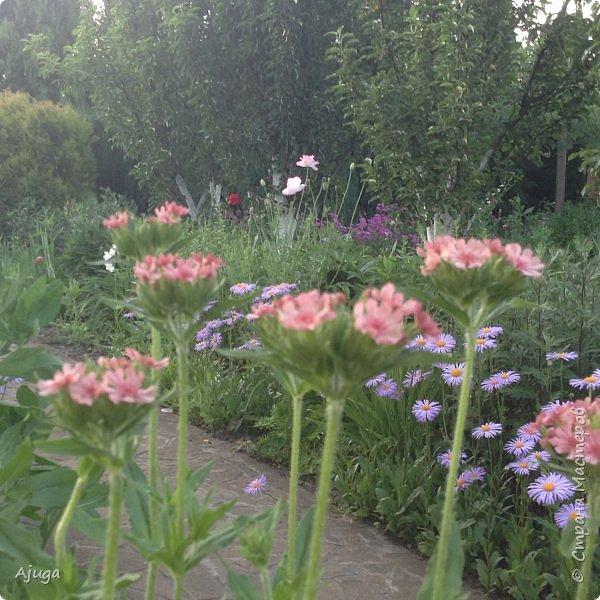 Мой сад сегодня... фото 20