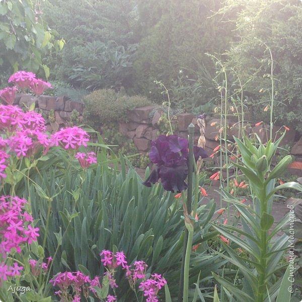 Мой сад сегодня... фото 23