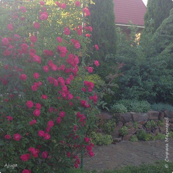 Мой сад сегодня... фото 24