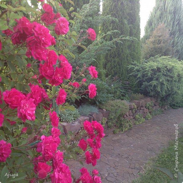 Мой сад сегодня... фото 25