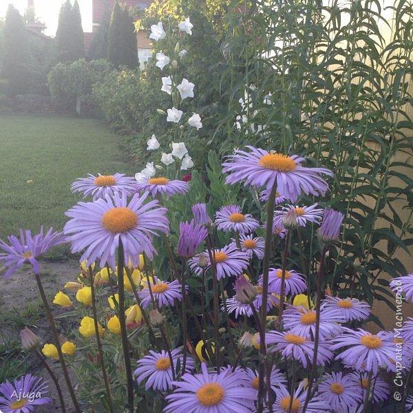 Мой сад сегодня... фото 26
