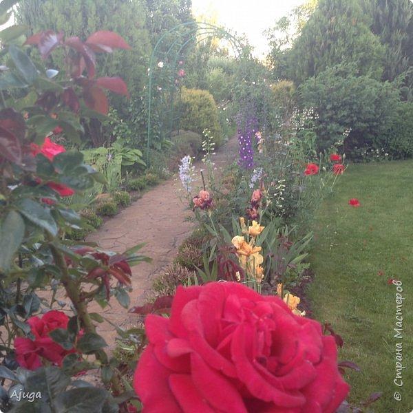Мой сад сегодня... фото 32
