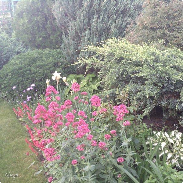 Мой сад сегодня... фото 33