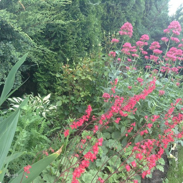 Мой сад сегодня... фото 34