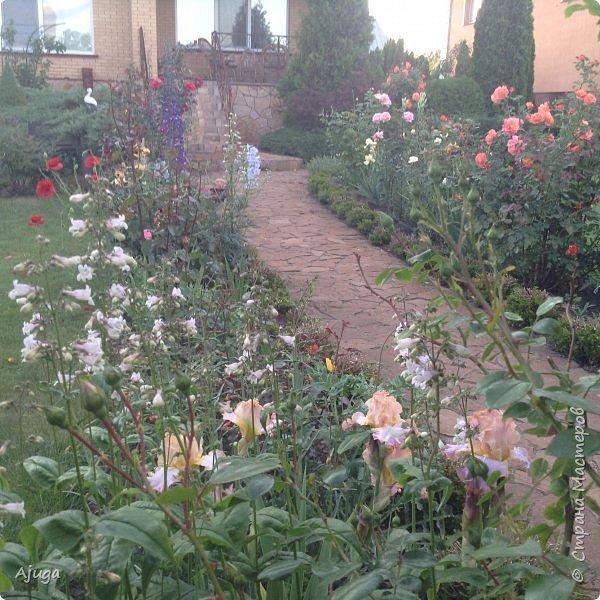 Мой сад сегодня... фото 35