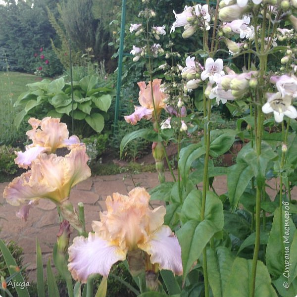 Мой сад сегодня... фото 36