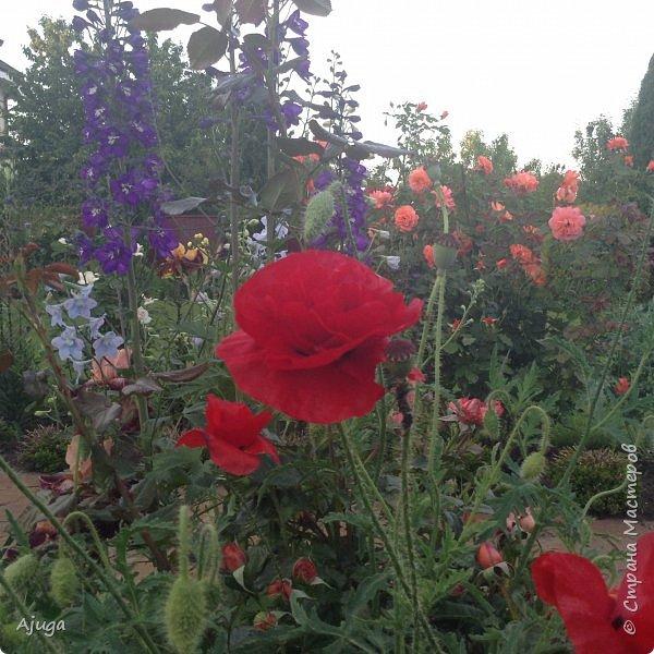 Мой сад сегодня... фото 37
