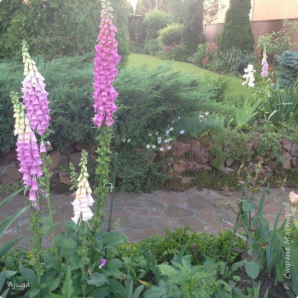 Мой сад сегодня... фото 39