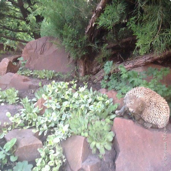 Мой сад сегодня... фото 40