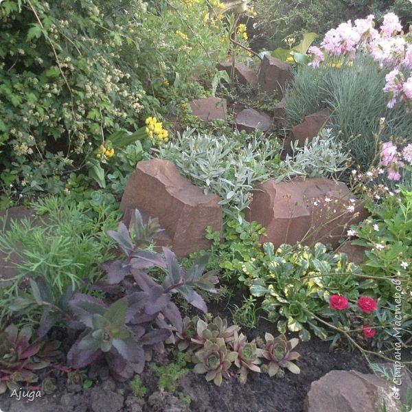 Мой сад сегодня... фото 42