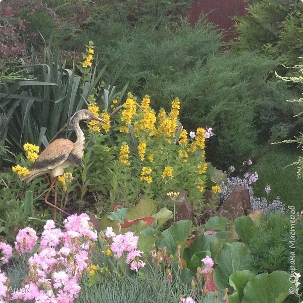 Мой сад сегодня... фото 43