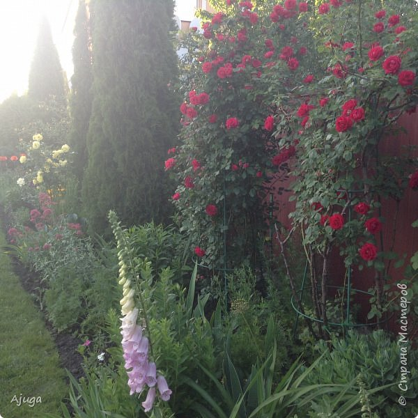 Мой сад сегодня... фото 7