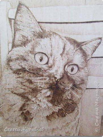 Кошечка Жулька фото 4