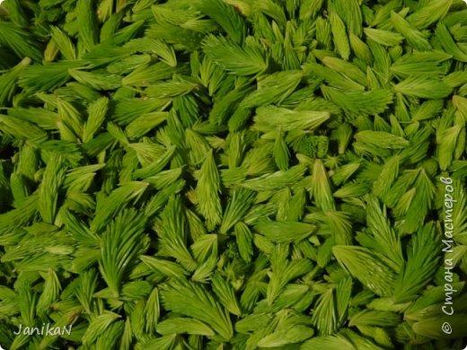 """Весной и ранним летом в лесу можно любоваться ярко зелеными """"шишечками"""" ростками ели. Гуляя в лесу люблю их иногда погрызть просто так за их интересный хвойно -кисловатый вкус, а еще я их собираю и делаю всякую вкуснятину и еще в них очень много витаминов  фото 2"""