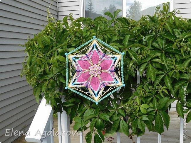 Лето продолжает радовать солнышком и цветами. Моя новая цветущая Мандала с бабочками.   фото 5